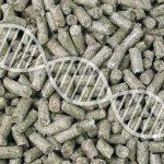 GMO w paszach – czy jest się czego obawiać?