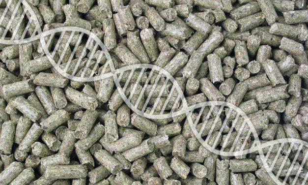 GMO wpaszach – czyjest się czego obawiać?